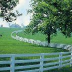 Kentucky lo stato dei cavalli il l buon Whiskey ed il college Basketball